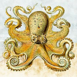 vintage octopus choose either print, t shirt transfer or sticker