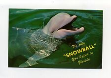 "Miami FL Seaquarium Dolphin ""The Only Snowball You'll Find in Florida"""