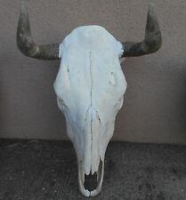 "A NEW 15"" wide STEER SKULL HORN,LONGHORN,cow,bull,Mexico,FEED taxidermy,JIG head"