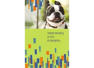 American Greetings Thank You Card: Thanks For Being So Nice...So Doggone Great!