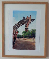 Limited Edition A3 Signed Print Painting Safari Giraffe by Artist Vanessa Grundy