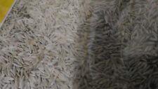 60 gramos semillas de lechuga para canarios periquitos agapornis jilguero