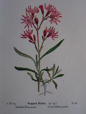 Estampe originale Ragged Robin/Shepherd's Purse British fleurs sauvages 1941