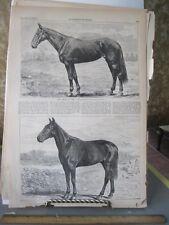 Vintage HORSE Print,AMERICAN GIRL,Mountain Boy,Harpers,1869