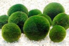 6x Nano Chladophora Moss Balls Live Aquarium Fish Tank Fresh Water Plant