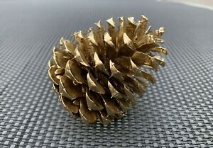 Gold Painted Natural Pine Cones Tinted in Gold Spray 6 Pieces