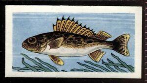 Tobacco Card, Amalgamated, Mills, FRESHWATER FISH, 1958, Ruffe or Pope, #15