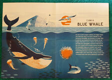 Blue Whale A2 Poster (NHM / Natural History Museum)