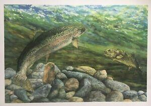 Trudy Evenson Montana Dream Hole Rainbow Trout Ltd Ed Print Montana Artist