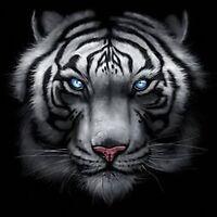Big and Tall Graphic Tee Shirt Majestic White Tiger Mens Black Pro Club T Shirt