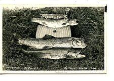 3 Trout Caught-21 Pounds-Wicker Gear Basket-RPPC-Real Photo Vintage Postcard
