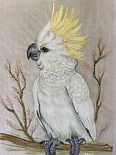 Peinture sur papier de riz asie oiseau cacatoes à huppe jaune