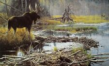 Vintage Art Robert Bateman Autumn Overture 1980 Moose Bull Pond Wilderness Fall