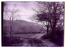 2 Glass Negatives Dwight's Mill Monadnock & Lake from Caitlin's DUBLIN NH 1900