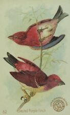 1880's Arm & Hammer Handsome Birds Crested Purple Finch Trade Card P132