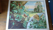Vintage Eileen A Soper School Print/Poster-Enid Blyton Nature Series Brownie Ivy