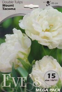 Tulip Double White - 15 Bulbs Per Pack