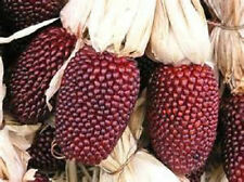 1/2 lb  Red Strawberry  Popcorn seeds  new seeds for 2017 planting season