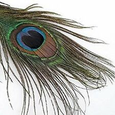 Peacock Feathers Natural Beautiful Pack of 10