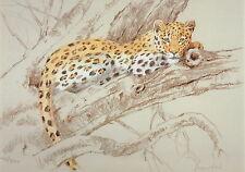 Stampa Leopard, Leopard Picture Limited Edition Leopard foto dt18