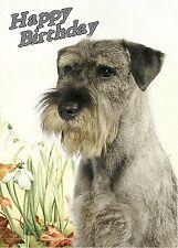 Schnauzer Dog Design A6 Textured Birthday Card BDSCHNAUZER-2 by paws2print