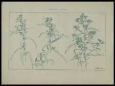 LIN, HABERT DYS -1896- LITHOGRAPHIE, ART NOUVEAU, FLEURS,