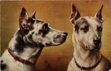 PC DOGS, A PAIR OF TIGER-DOGGEN, VINTAGE POSTCARD (b3567)