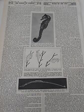 The Curious tale of The Sea-Horse  the world science 1946 Print Article