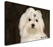 More details for maltese dog 'yours forever' x-large 30