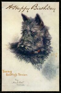 1924 YOUNG SCOTTISH TERRIER DOG MAUD WEST WATSON POSTCARD TUCKS SKETCHES OF DOGS