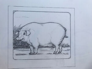 Original Pencil Drawings Sketch Book Lucius DuBose Pig Birds Flowers More!
