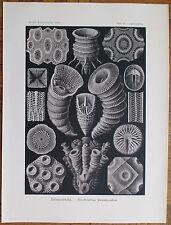 HAECKEL: Tetracoralla Coral 1st. Edition - 1900