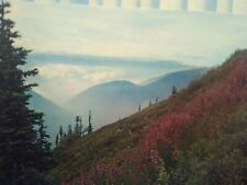 VINTAGE PHOTO POST CARD  SUMMER FLOWERS IN OLYMPIC NATIONAL PARK  WASHINGTON
