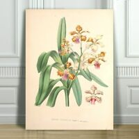 JEAN LINDEN - Beautiful Pink Yellow Orchid #11 - CANVAS ART PRINT POSTER -24x16""