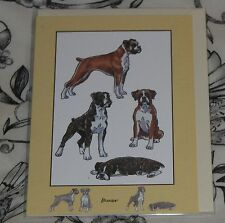 BOXER GREETINGS CARD  blank inside so suitable for any occasion