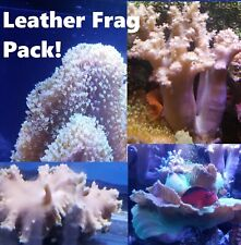 Leather Frag Pack, 4 Frags (Beginner Reef Zoas Salt Water Coral Live toadstool)