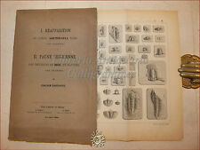 FOSSILI: Barrande, REAPPARITION DU GENRE ARETHUSINA + FAUNE SILURIENNE Hof 1868