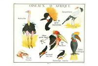 BIRDS of AFRICA POSTCARD - FRENCH LANGUAGE - OISEAUX D'AFRIQUE - NEW & PERFECT