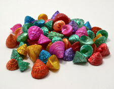 25 piece lot dyed Tectus Fenestratus Sea Shells Beach Nautical Decor Craft Shell