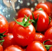 TOMATO - ALICANTE - 150 SEEDS - Up to 150g/5oz