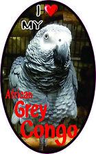 I LOVE MY AFRICAN GREY CONGO Bumper Sticker #253