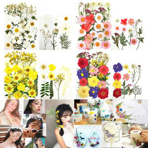 36X Small Dried Flowers Pressed Flowers Scrapbooking DIY Preserved Flower Decor