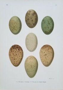 Naumann, Johann Friedrich, antique egg print, 1-4) Otis Tarda 5-7) Grus Grus
