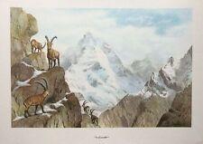 Stambecchi-Sandro Nardini imprimer-Vintage Mountain Goat Poster Print, 39x60cm