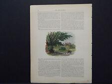 Picturesque America, Art Journal Handcolor c.1890 Belvoir Castle Grantham Rd #31