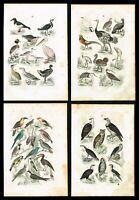 1869 Owl, Toucan, Golden Pheasant, Lot of 4x Hand-Colored Antique Prints, Martin