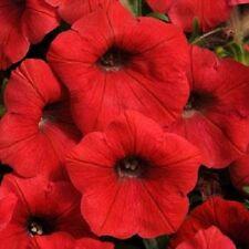 25 Pelleted Petunia Seeds Shock Wave Red trailing petunia seeds wave petunia