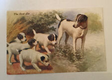 Postcard With Rat Terrier Mom And Pups Salmon Series Tm Printed In England