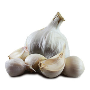 """Garlic  """"Provence Wight"""" type 50 seeds from 5 bulbs / Planting now"""