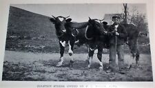 1901 MAINE Agriculture Farming Dairy Jersey Cows Apple Orchards Chickens Farm